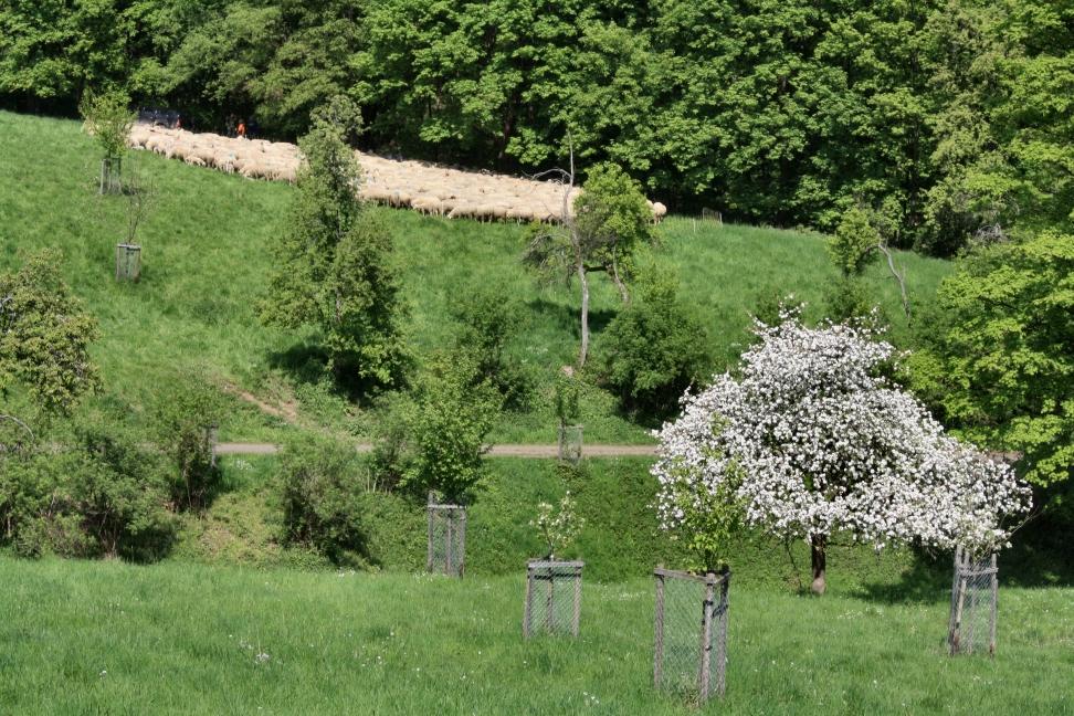Löwenburg im Siebengebirge. Bild: K. Weddeling