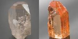 左:放射線照射前。右:照射後