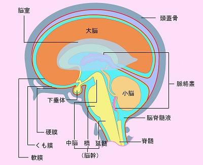 頭蓋仙骨治療のイメージ画像(CST療法)
