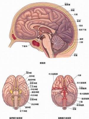 頭蓋仙骨治療の脳内部画像(CST療法)