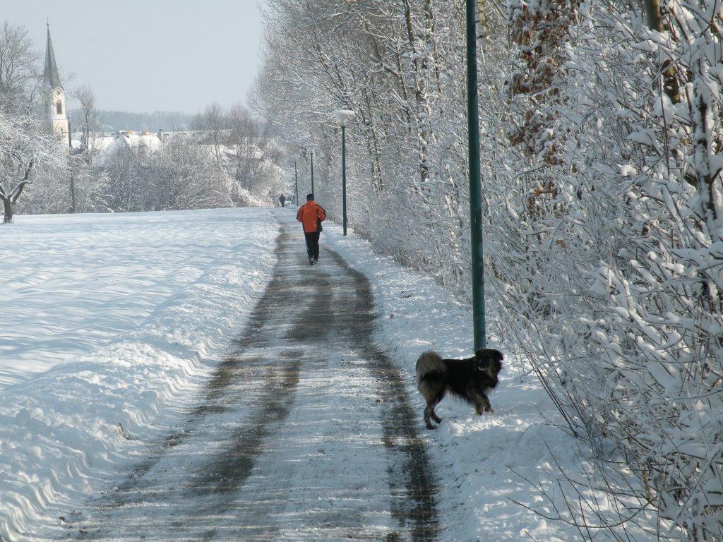 Winterspaziergang am Naturlehrpfad