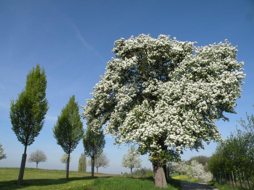 Frühling am Magdalenaberg