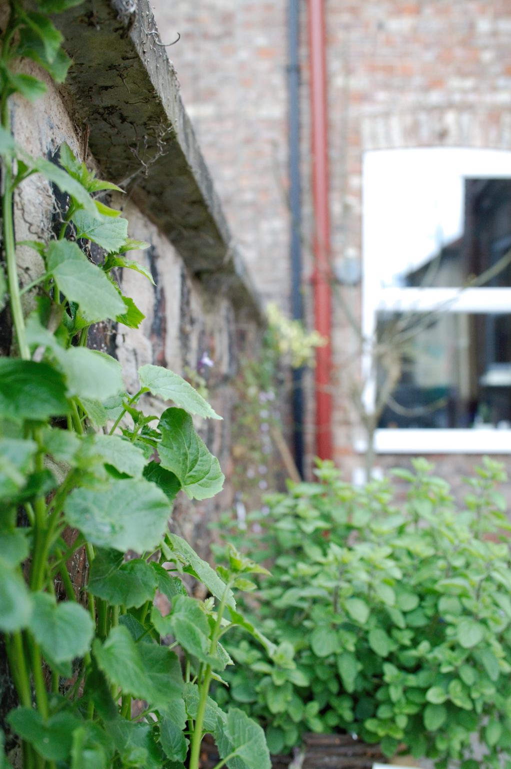 Mein englischer Garten - Mauerblümchen - Zebraspider DIY Anti-Fashion Blog