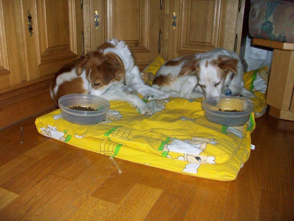 Im Liegen schmeckts am Besten (Chivola und Ayla)