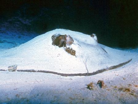 Tauchen Cayo coco