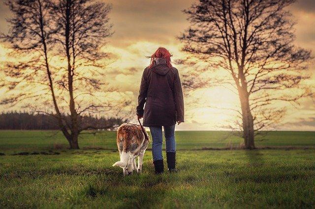 Der Spaziergänger und sein Hund - Wie Wirtschaft und Börse