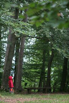 Lernort Natur: Kind entdeckt den Wald