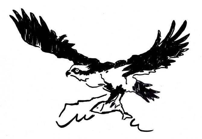 Dibujo de Pere Amorós para la campaña por reintroducir al águila pescadora en el Montgó hace cinco años