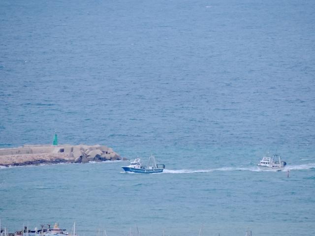 En El Marino Denia ofrecemos las mejores capturas llegadas a puerto.