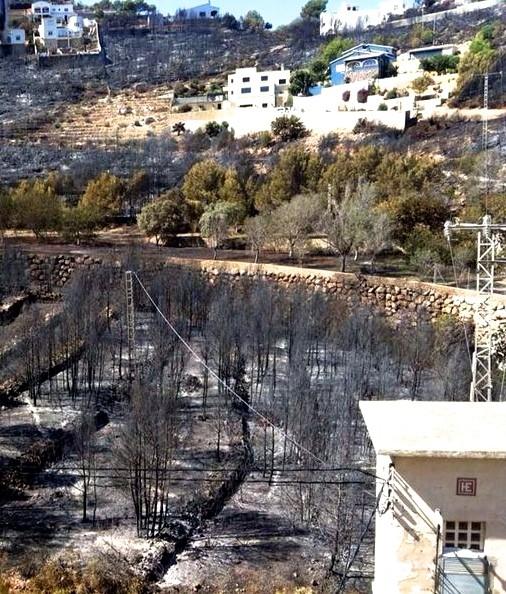 Pinar de les Rotes arrasado por el fuego en el Parque Natural del Montgó