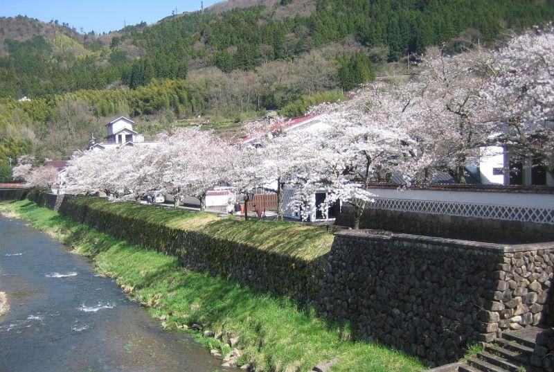 津和野の桜 2021年3月