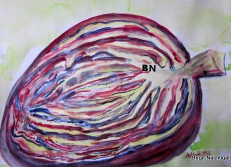 """""""Aufgeschnittener Rotkohl"""" als Aquarell erstellt hat Spaß gemacht zu malen. 40X30 cm groß. Signiert mit Nachtigall"""