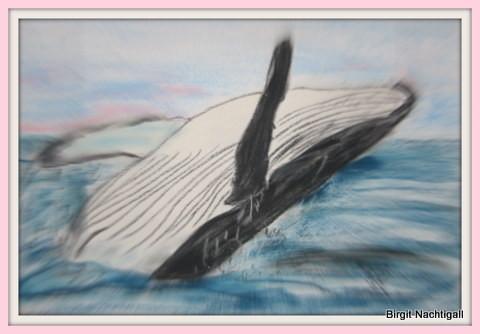 Orka mit Pastellkreide gemalt, auf Auquarellpapier. Kauf des Bildes: E- Mail: 1adler-nachtigall@web.de,