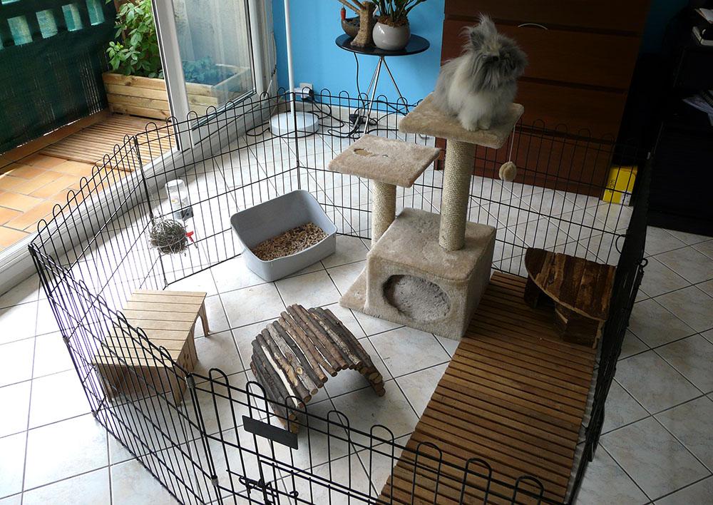 habitat du lapin elevage le grand monarque lapin geant papillon francais et belier nain minilop. Black Bedroom Furniture Sets. Home Design Ideas