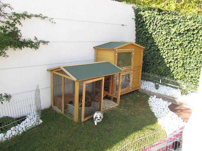 habitat du lapin elevage le grand monarque lapin geant. Black Bedroom Furniture Sets. Home Design Ideas
