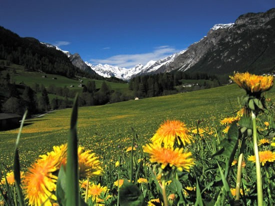 Traumhaft Flora und Fauna im Wipptal