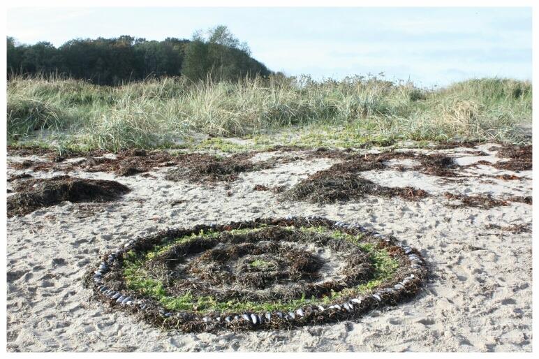 Bild vom Ostseestrand mit gestalteter Form aus braunem sowie grünem Seegras mit Miesmuscheln darauf gelegt es erinnert an Kreise wie wenn Wassertropfen auf Wasser fällt