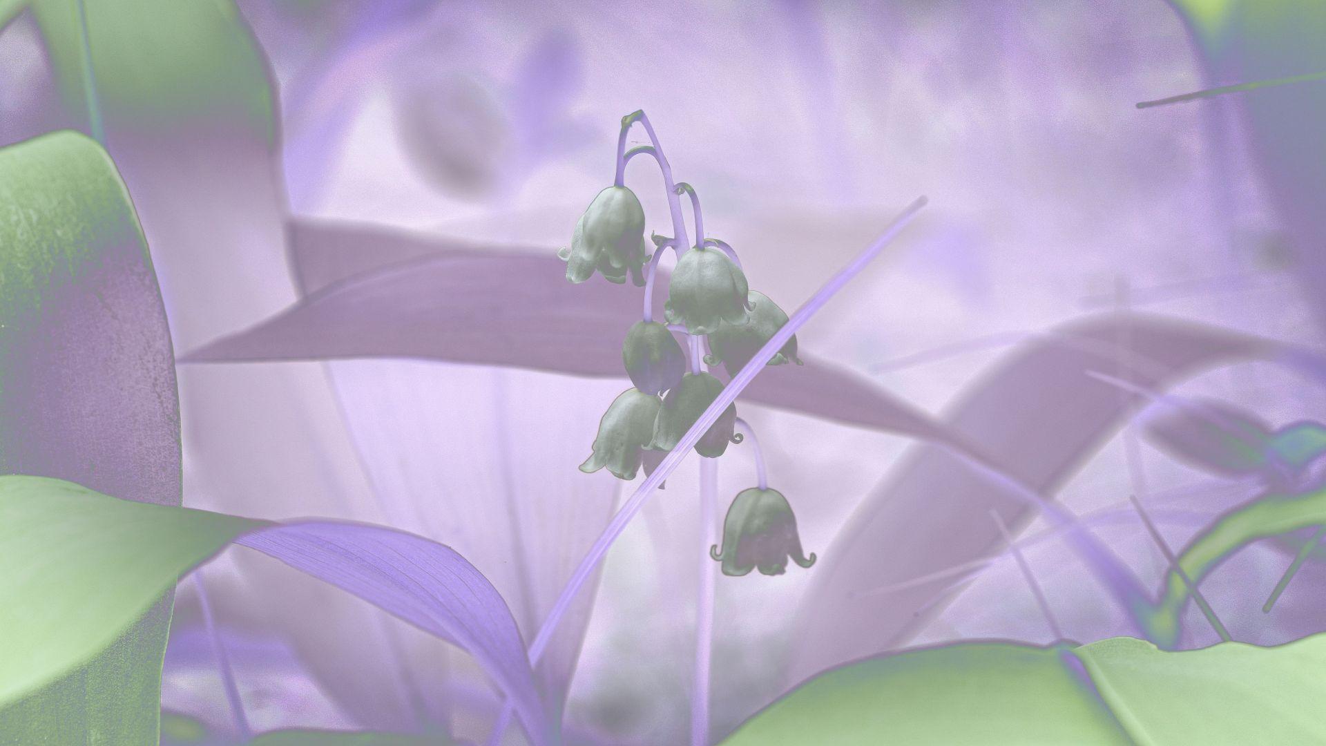 Kräuter und Wildpflanzen