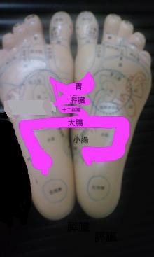 消化器系反射区 全体図