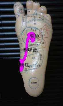 腎臓、輸尿管、膀胱 反射区