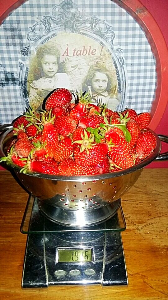 Cueillette de fraises pour vos confitures
