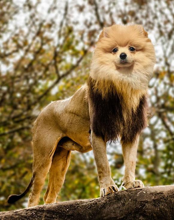 """Lion/Dog"" - LydiaP"