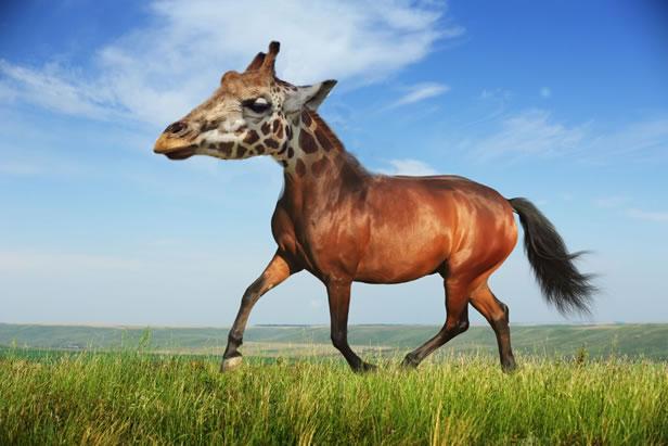 """""""Horse-Giraffe"""" - NyomiD"""