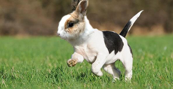 """""""Dog/Rabbit"""" - AberdeenS"""