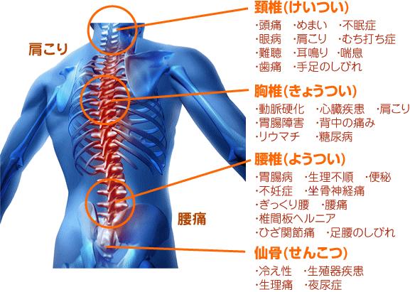 肩こり、腰痛は猫背や骨盤に関係します