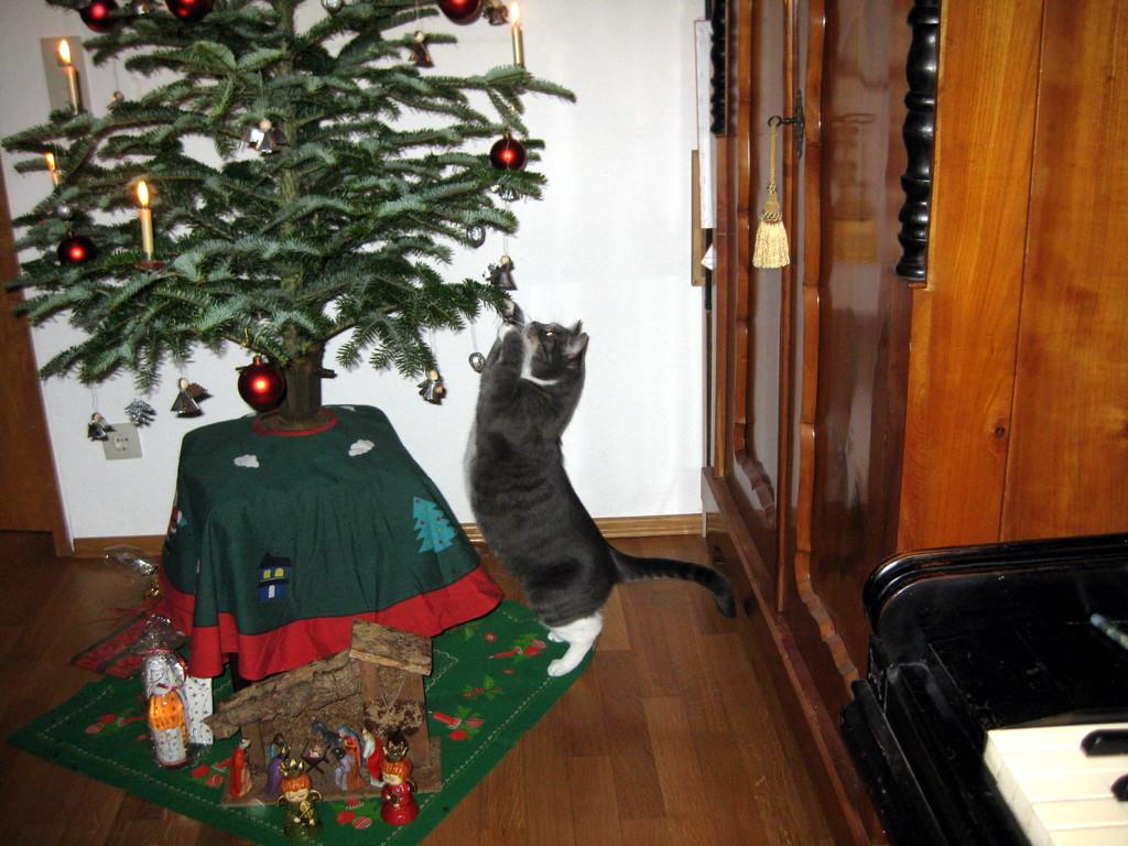 Berta testet mal den  Weihnachtsschmuck