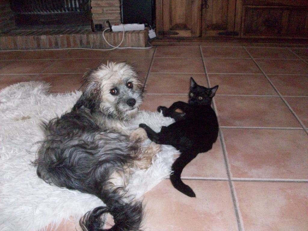 Hunde und Katzen im harmonischen Miteinander