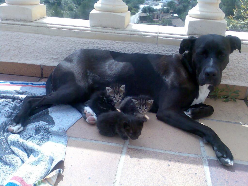 Jessy als Katzenmama