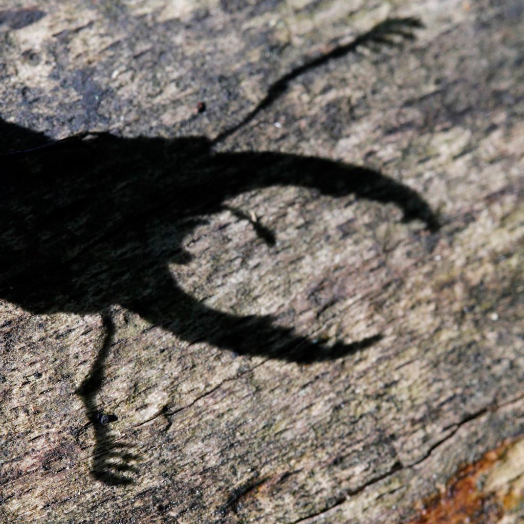 exposition d 39 images au naturel photographies de gwenole le guellec d 39 insectes et de plantes en. Black Bedroom Furniture Sets. Home Design Ideas