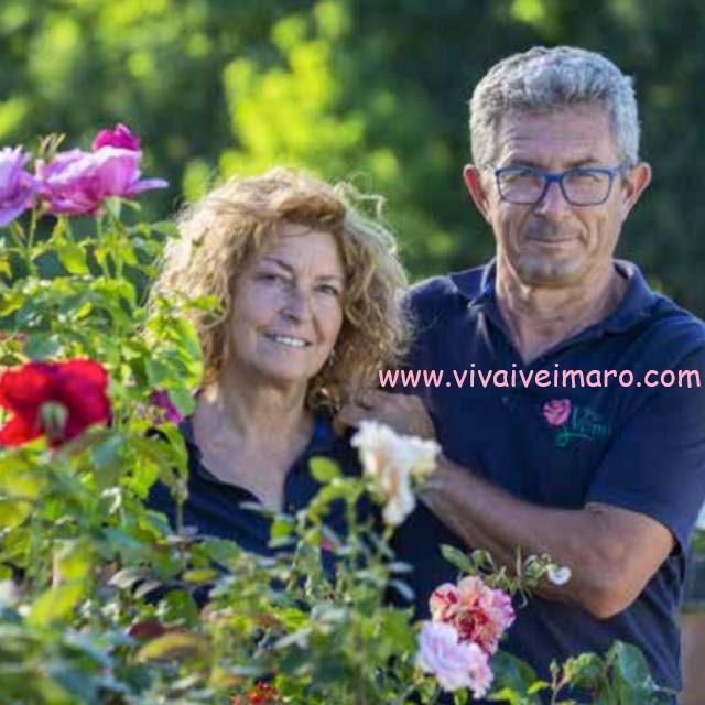 Vivai Veimaro -  Via Amendola 486/A  13836 Cossato (BI) (+39) 345 096 4579  info@vivaiveimaro.com