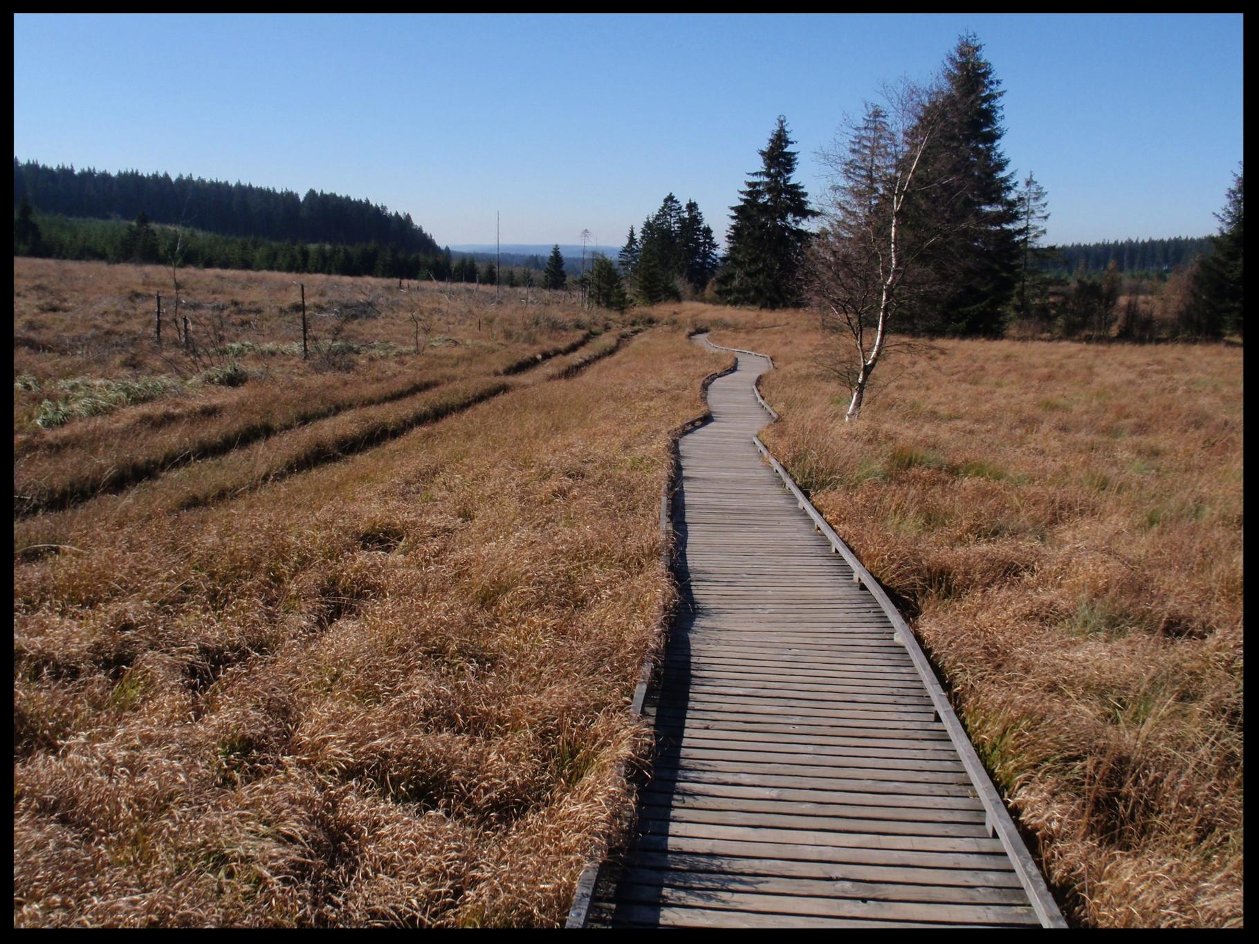 Holzplanken sind oft die einzigen Wege durch das Hohe Venn.  Hier eine Aufnahme im Herbst.