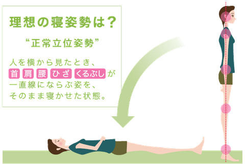理想の寝姿勢 正常立位姿勢