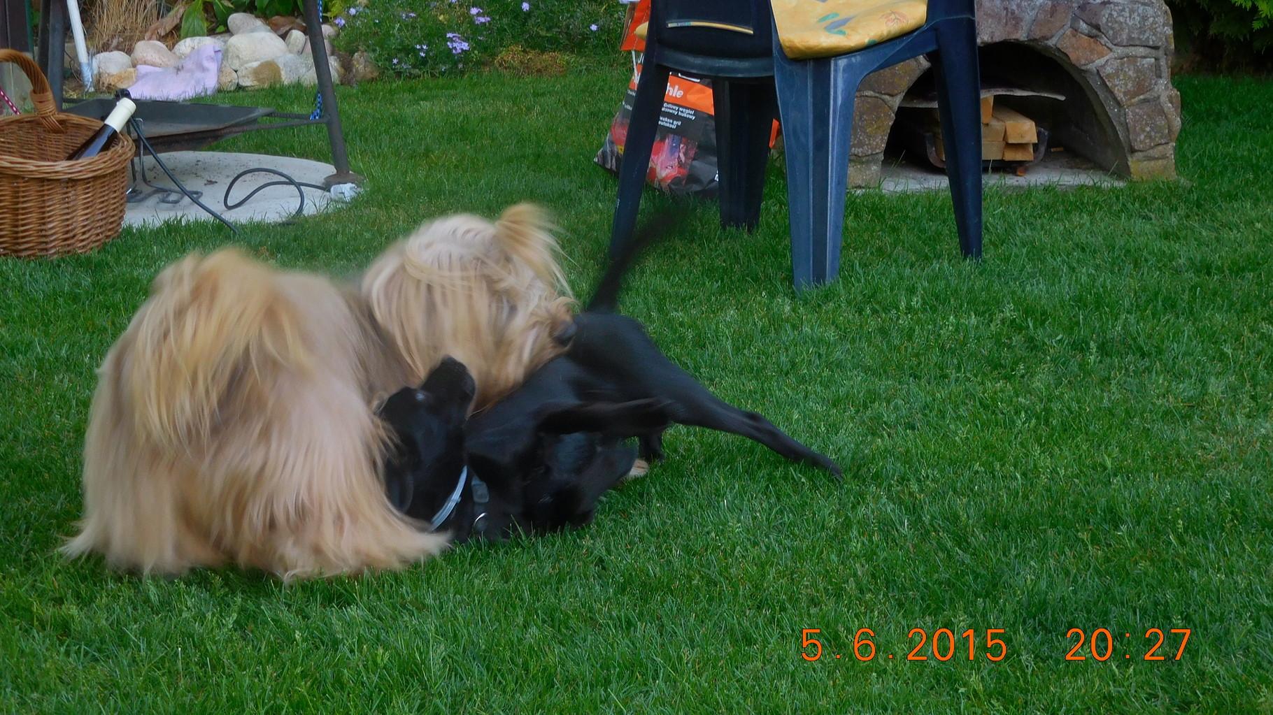 Hach, im Sommer mit meiner Freundin Stupsi im Garten spielen, schön...