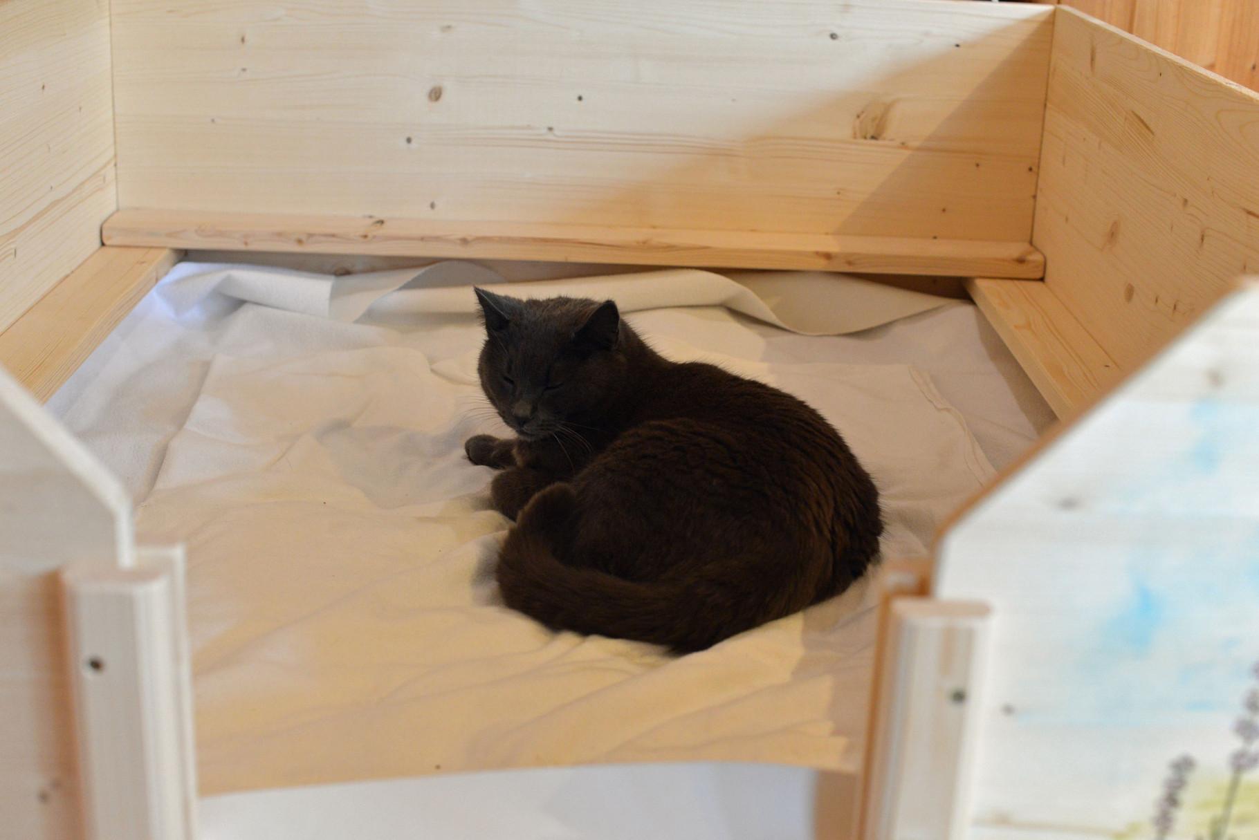 Katze Ronja liegt Probe in der Wurfkiste