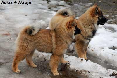 Askia und Atreju