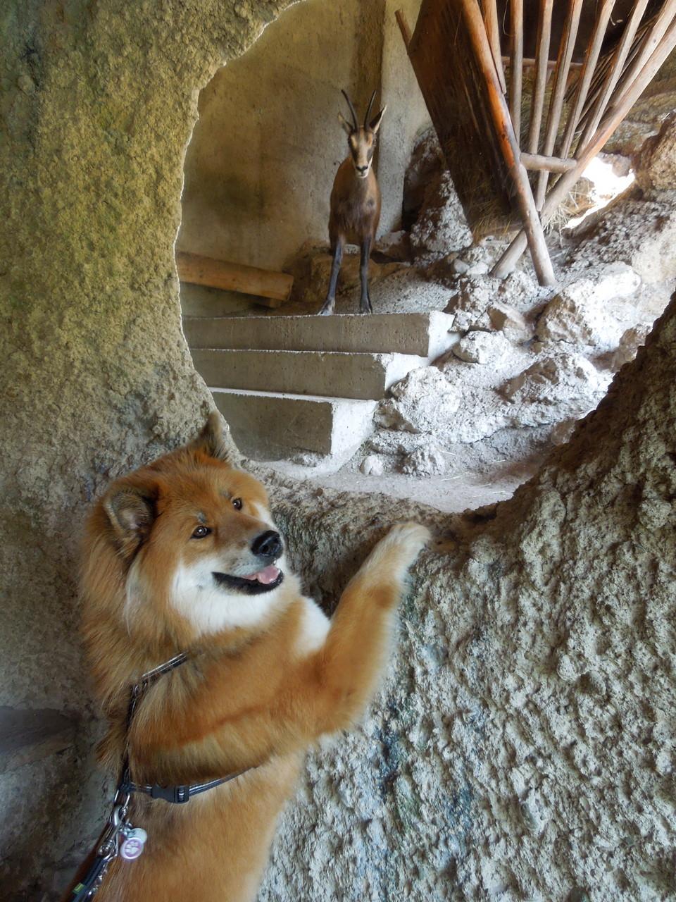 Aimi hat keine Angst vor wilden Tieren, auch wenn sie Hörner haben:-))