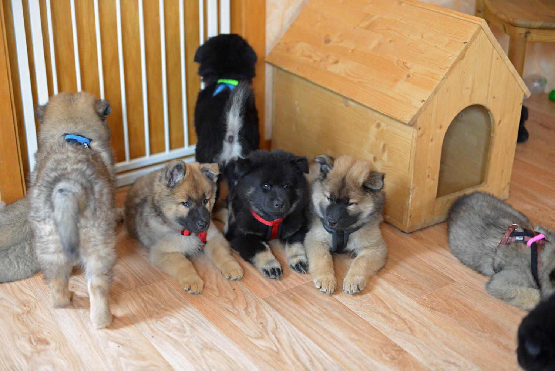 Alle Neune: ganz links Bluebell, darüber Bruno, dann Baika, Bijou-Josie und Bamse, dahinter Boo-Nanuk, vor der Hütte Bille, hinter der Hütte Bjarne Samu und ganz rechts vorn im Eck Bärbel