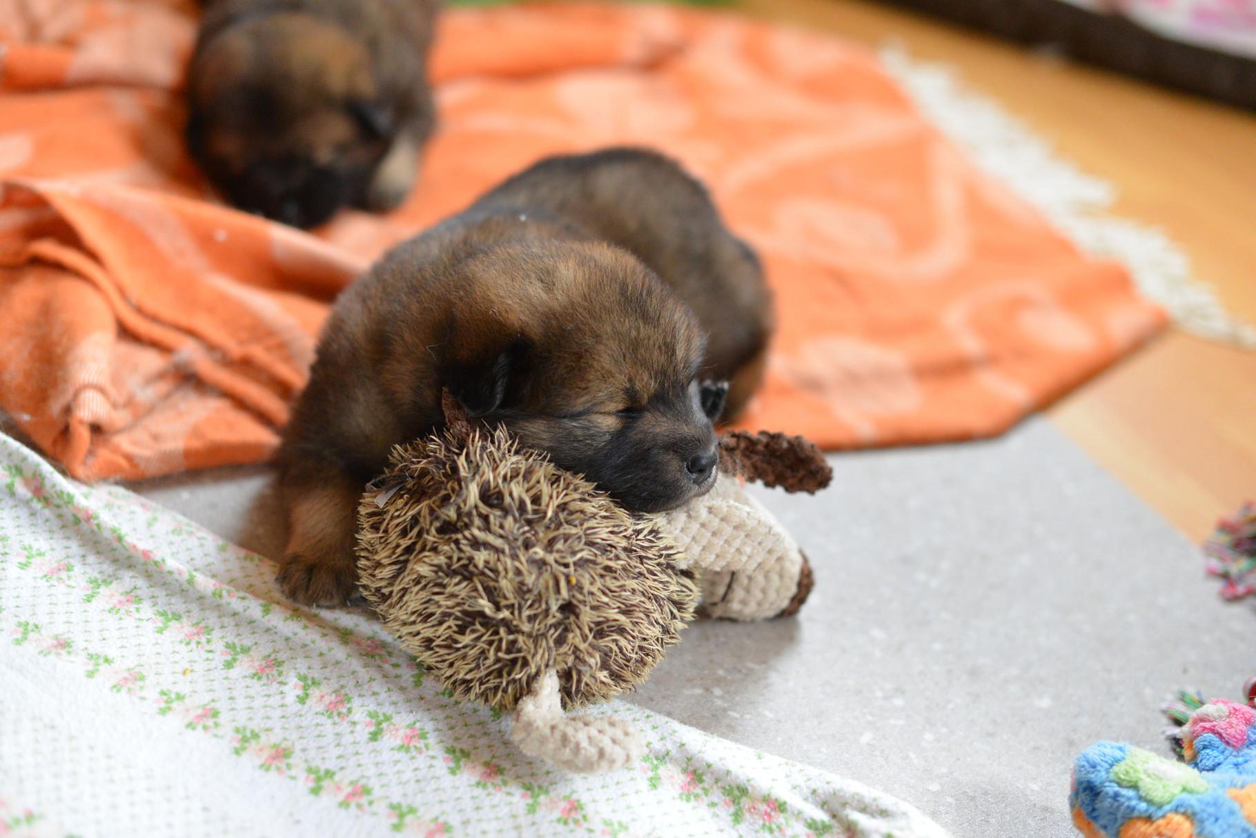 Bequemes Kissen, so ein Stoffhund