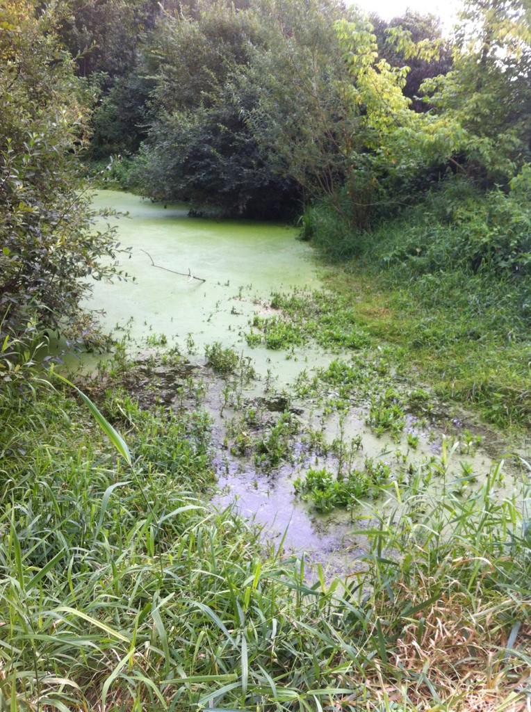 Rivière Le Maure Payns
