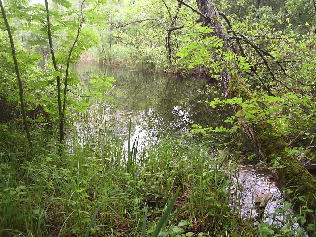 L'étang de Vallant Saint Georges-Mesgrigny