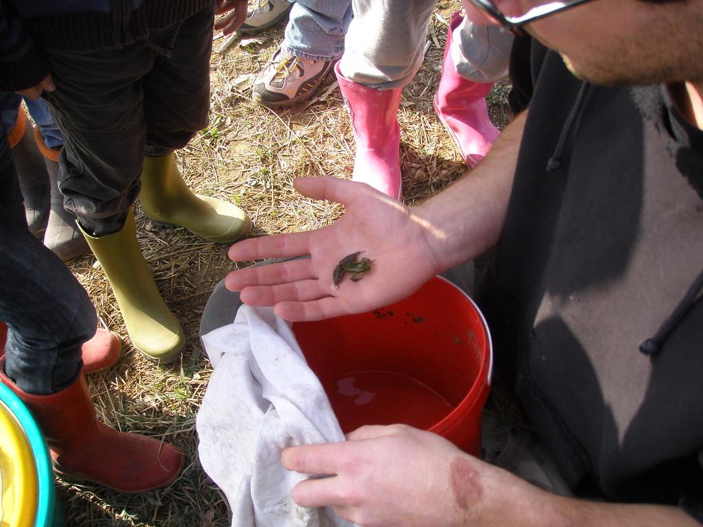 et la visite d'une grenouille
