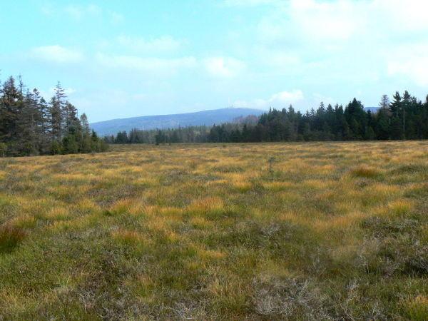 Blick über das Hochmoor bei Torfhaus