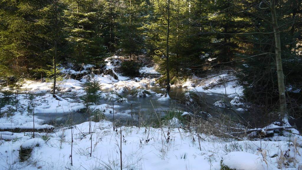 der Zulauf im Wald