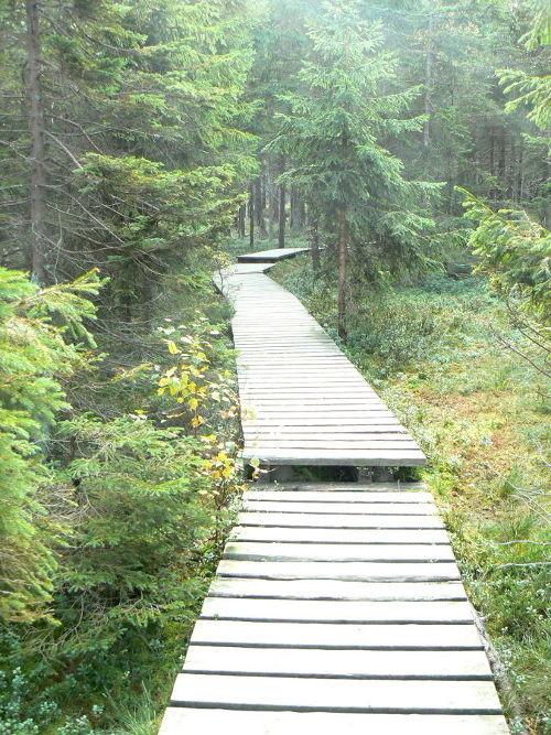 Weg über das Hochmoor bei Torfhaus