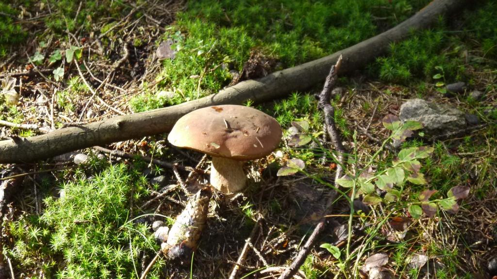 Pilze im Harz