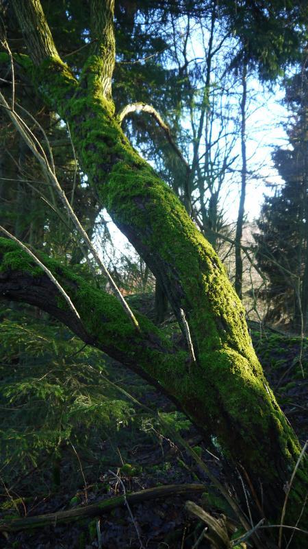 Der Rand einer Pinge, die älteste Form des Berbaues auf Eisen im Harz